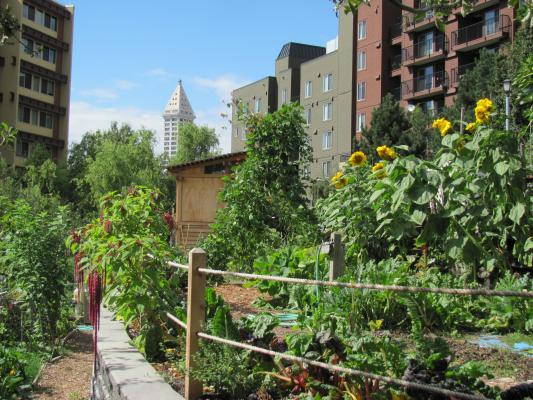 At 1.5 acres, the Danny Woo Community garden is the largest green space in the Chinatown-International District, sitting with a view of the Smith Tower. Photo courtesy InterIm CDA.