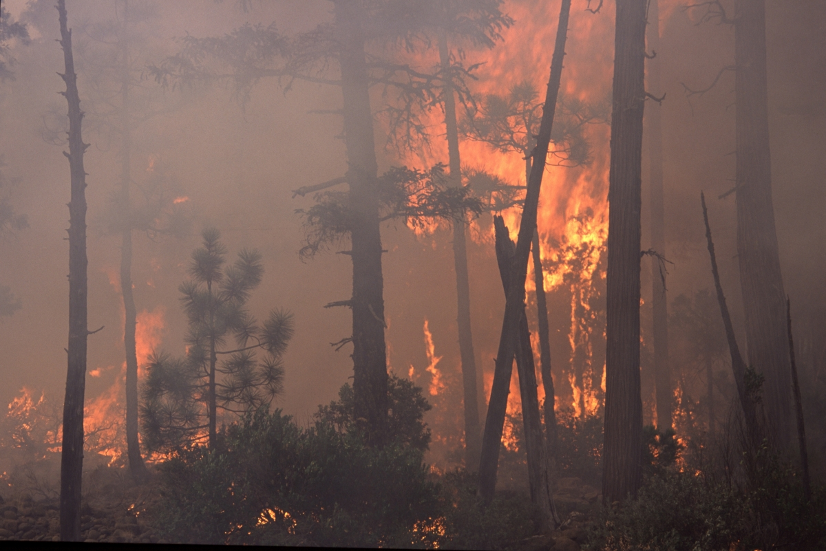 A wildfire burns in the Pacific Northwest in May 2013.