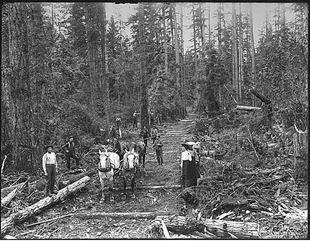 Horse team pulling log on Skid Road circa 1902