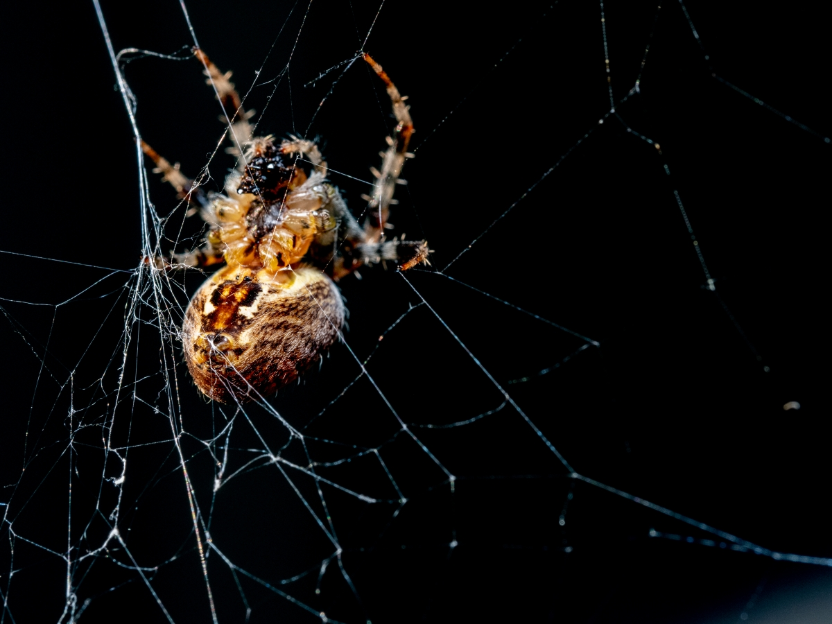 It's spider season in the Pacific Northwest. A couple weeks ago, we requested on social media that readers send in their best spider photos. Photo by Mark White