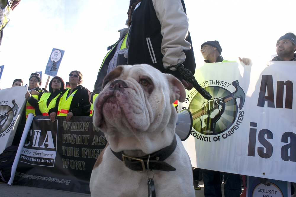 Poncho the dog helped lead the march. Photo by Jon Williams